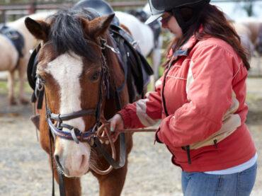 horse riding yoga retreat brecon beaons